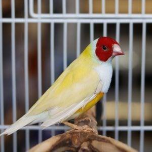 Ασθένειες Πτηνών pic6422