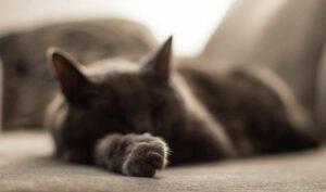 γάτα που κοιμάται